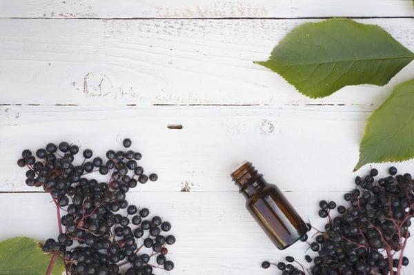 elderberry (2)
